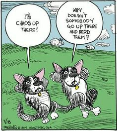 What kind of mind can not only place themselves in the mind of another, but another species? That's exactly what my collie would think. Border Collie Humor, Border Collie Art, Political Cartoons, Funny Cartoons, Cartoon Humor, Funny Memes, Collie Puppies, Australian Cattle Dog, Australian Shepherds