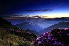 Azaleas by dusk @Hehuanshan 淡定 by Thunderbolt_TW on Flickr.