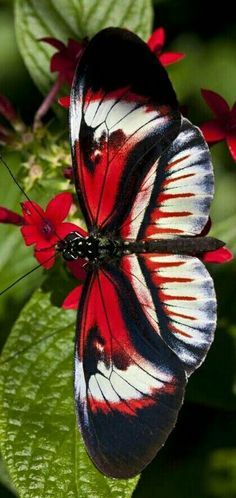 Butterfly Painting, Butterfly Wallpaper, Butterfly Wings, Beautiful Bugs, Beautiful Butterflies, Beautiful Creatures, Animals Beautiful, Butterfly Species, Butterfly Pictures
