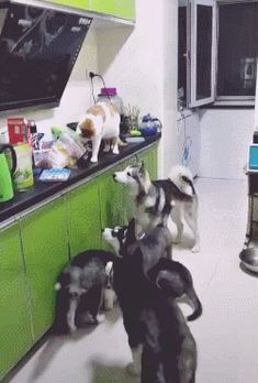 The cat decided to feed hisfriends