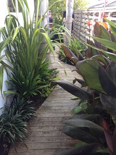 This was a path winding through a narrow area in a subtropical garden we visited.  With shade loving plants, could this sort of thing work on the south side of the house?