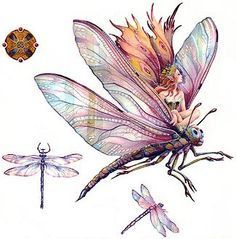 dragonfly fairy - Google zoeken