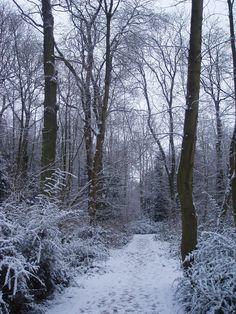 Sherfield Park Woods, Sherfield on Loddon