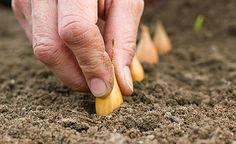 Wie Sie einen Bio-Garten anlegen