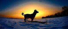 Beautiful photo of dog on the background of the by InfinityRainbow, zł61.90