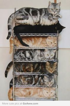 because no one likes a disorganized pile of kitties. Bowen¯if you were a crazy cat lady your cats would be organized. Animals And Pets, Funny Animals, Cute Animals, Funny Horses, Wild Animals, Baby Animals, Crazy Cat Lady, Crazy Cats, I Love Cats