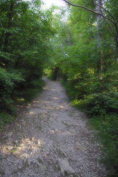 Bosco di Basovizza sentiero