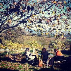 Perfect Sunday afternoon @ Settlement wines, McLaren Vale