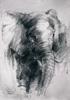 Art Drawings Sketches Simple, Animal Sketches, Pencil Art Drawings, Charcoal Art, Charcoal Drawing, Realistic Animal Drawings, Elephant Sketch, Architecture Drawing Art, Colored Pencil Artwork