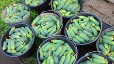 Hydroponic Growing, Hydroponics, Bolet, Baked Breakfast Recipes, Garden Trellis, Small Farm, Farm Gardens, Edible Garden, Growing Vegetables