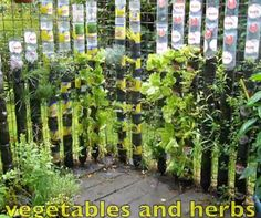 Vertical Garden Made with recycled plastic bottles