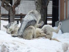 狼祭実行委員さんのツイート:…