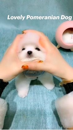 Super Cute Puppies, Cute Baby Dogs, Cute Babies, Cute Little Animals, Cute Funny Animals, Puppy Names Unique, Funny Vidos, Funny Memes, Funny Animal Videos