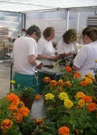 La jardineria nos puede ayudar a ser capaces de trabajar en equipo y a conocer la importancia de los distintos cuidados que necesita un ser vivo.