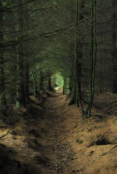 Ancient forest path, Scotland