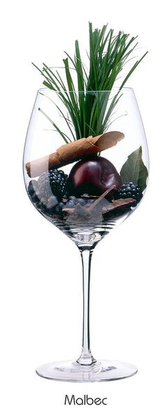 Cómo elegir un buen vino, guía para principiantes