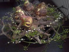 Inspiratie foto's : Decoratie met amaryllis,katjes en groene bessen