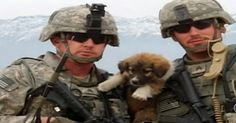 This Soldier Was Kind To These Stray Dogs….What They Did To Protect Him Is Amazing! | FamilyPet