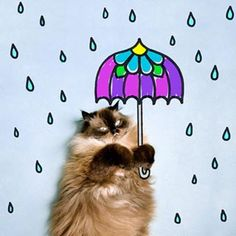 This cat who is well-prepared for inclement weather. | 11 Little Things To Make You Smile This Week