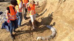 Encuentran restos de un mamut de un millón de años en Austria - http://www.vistoenlosperiodicos.com/encuentran-restos-de-un-mamut-de-un-millon-de-anos-en-austria/