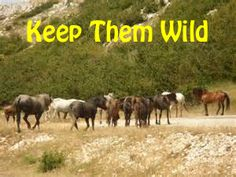 Day #28 in ‪#‎30Days30Ways‬ to ‪#‎HelpAHorse‬ , keep wild horses wild by making your voice heard! Share posts about wild horses, make calls, sign petitions, and just make a lot of noise! Let your state and the federal government know how you feel about the plight of wild horses!