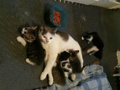 Two Brothers Feed a Fearful Feral Cat, Months Later, She Brings Her Babies to Meet Them - Love Meow Found Cat, Cat Toilet, Cat Garden, Feral Cats, Two Brothers, Cat Birthday, Cat Sleeping, Cat Crafts, Pretty Cats