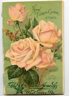 Vintage Diy, Vintage Labels, Vintage Poster, Vintage Postcards, Botanical Flowers, Botanical Prints, Flower Images, Flower Art, Vintage Pictures