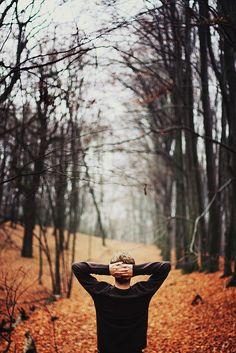 秋の森を散歩