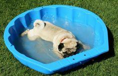 Aahhh....the water feels great!