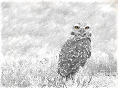"""""""Sketching The Wise Guy"""" Superb #photography #art by Beverly Guilliams"""