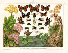 1904 Butterfly Insect Print Antique by AntiquarianPrints on Etsy, $20.00