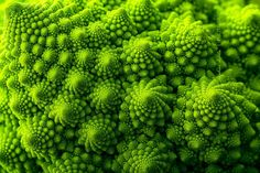 "These wonderfully symmetrical plants show the fractal nature of math, physics and the universe. Could this be evidence of sacred geometry? ""Look deep into nature, and then you will. Chou Romanesco, Romanesco Broccoli, Broccoli Plant, Fractals In Nature, Nature Plants, Pattern Photography, Nature Photography, Maths In Nature, Crassula"