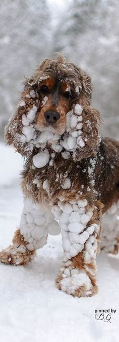 Yup, I remember those days, we had 2 spaniels & they loved the snow!