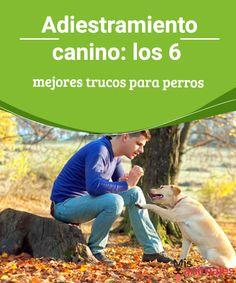 Adiestramiento canino: los 6 mejores trucos para perros  Aprende todo sobre el adiestramiento canino en este artículo, Técnicas y consejos para mejorar el comportamiento de tu perro.