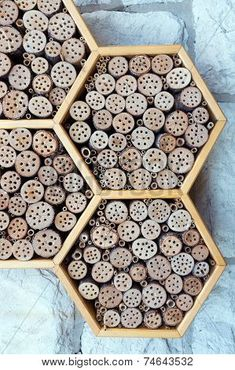 Photo about A wild bee and insect hotel. Image of house, shelter, ecological - 46057069 Wild Bees, Bug Hotel, Hotel Party, Bee House, Hotel Concept, Bee Friendly, Beneficial Insects, Terrarium Diy, Bees Knees