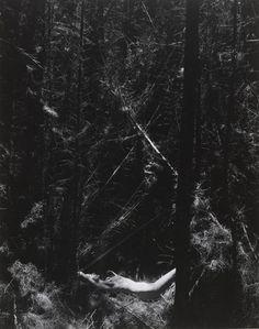 """Nude in Dead Forest Wynn Bullock (American, 1902–1975) 1954. Gelatin silver print, 9 9/16 x 7 9/16"""" (24.3 x 19.2 cm). Purchase. © 2012 Estate of Wynn Bullock"""