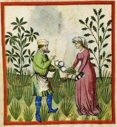 Tacuinum Sanitatis, ca. 1400 Onions