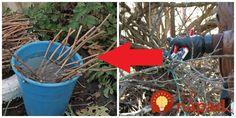 Ak sa chystáte na čistenie záhrady, konáre a prútie určite nelikvidujte, toto je perfektný nápad!