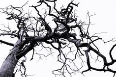 Tree Digital Photo Nature Print Nature Photo Black and