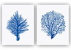 Nautical art, 2 Sea fan Prints, seafan coral, sea fan decor, navy blue fan sea, beach cottage decor, nature inspired, coastal decor, 11x14 by AlgaNet on Etsy