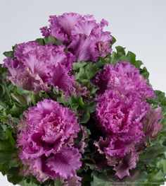 Purple Kale © 2015 Patty Hankins