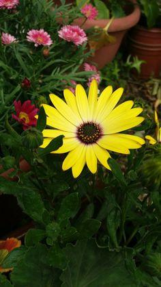 Beautiful Roses, Plants, Flowers, Fotografia, Plant, Planets