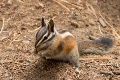 #sweetanimals #fotografie #usa #nationalpark via www.elderingfoto.nl #wauw