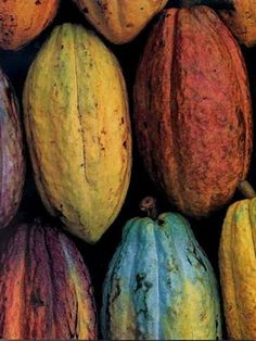 Where it all starts! Cocoa Beans*