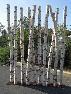 Paravent en troncs de bouleaux de 2m50 de hauteur