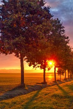 ~~Le Jour Se Leve17 | sunset trees landscape | by hubert61~~