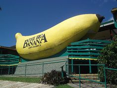 The Big Banana, Coffs Harbour...the long drive up to Surfers Paradise and dropping in to the Big Banana