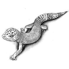 Best Gecko Tattoo Sketch A great realistic tattoo of a gecko. Sketch Tattoo Design, Tattoo Sketches, Tattoo Drawings, Drawing Sketches, Sketching, Gecko Tattoo, Lizard Tattoo, Animal Sketches, Animal Drawings