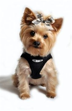 $18.99 Choke Free Dog Harness
