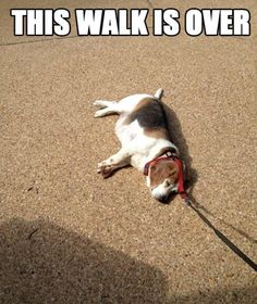 Walk Is Over funny picture